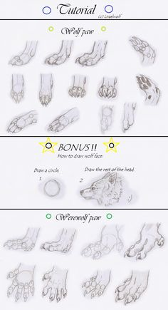 wolf paw drawing tutorial